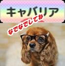 cavalier88_31_rainbow_2-vert.jpg