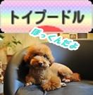 toypoodle88_31_rainbow_2-vert.jpg