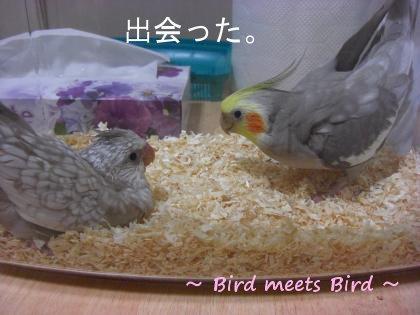 birdmeetsbird