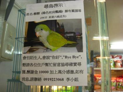 鳥街・迷子のポスター