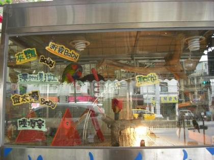 台湾鳥街31