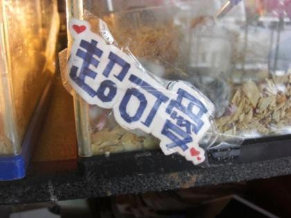 台湾鳥街32