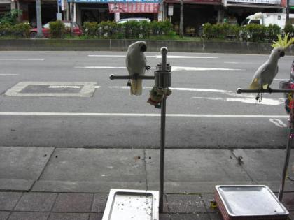 台湾鳥街37