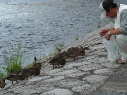 鴨とおじさん