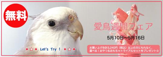 愛鳥フェア