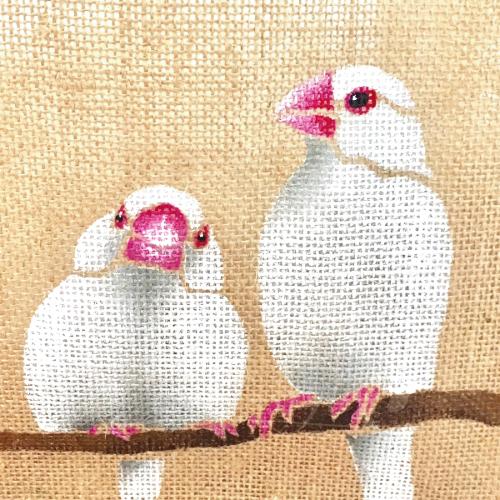 白文鳥x2