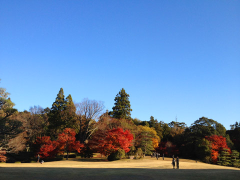紅葉 奈良 公会堂 2012年