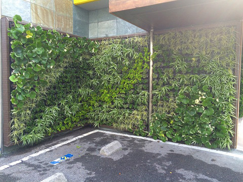 壁面緑化 スーパーホテル