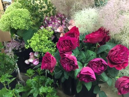店内の花たち