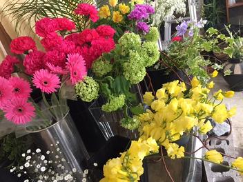 本日の春を彩る花