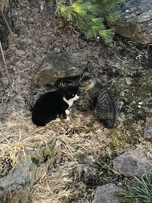 ネコ の 喧嘩
