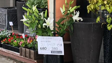 コロナ過 花屋