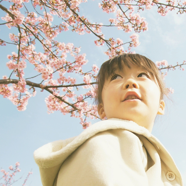 桜散歩a3