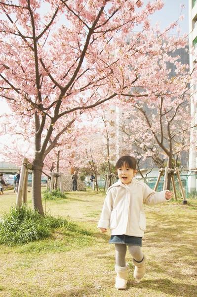 桜散歩a5