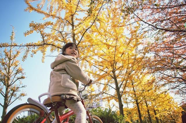 落ち葉狩り2012a1