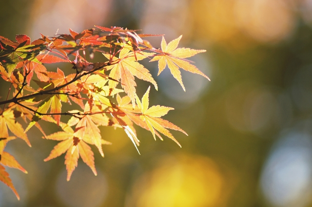 落ち葉狩り2012a4