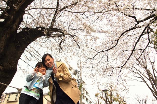 お花見2013a2