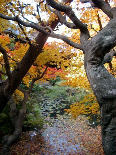 京都・紅葉の永観堂