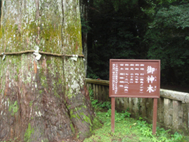 sinnboku