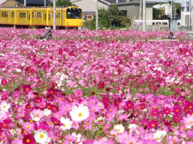 三岐鉄道沿線ポタリング?