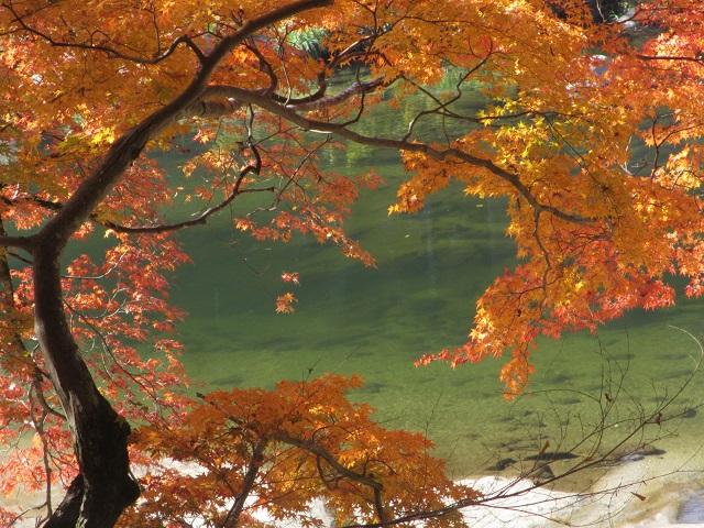 香嵐渓の紅葉㉒