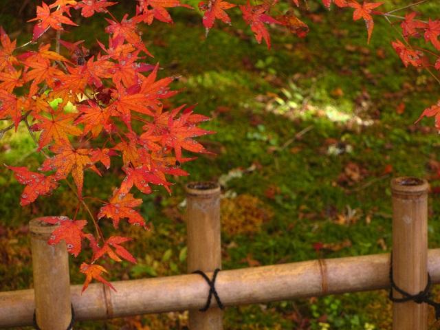 香嵐渓の紅葉㉓
