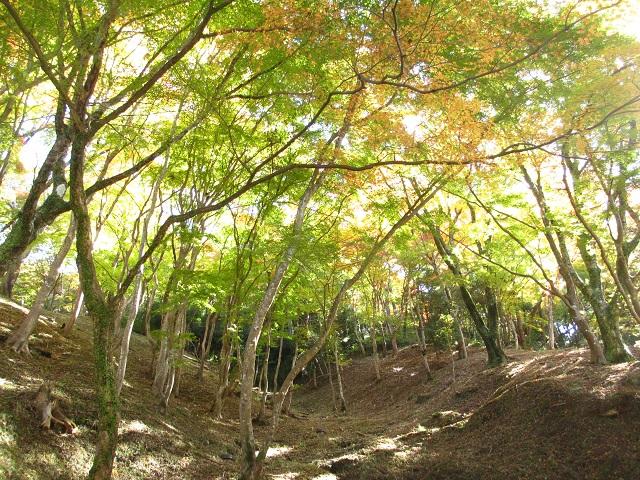 香嵐渓の紅葉㉕