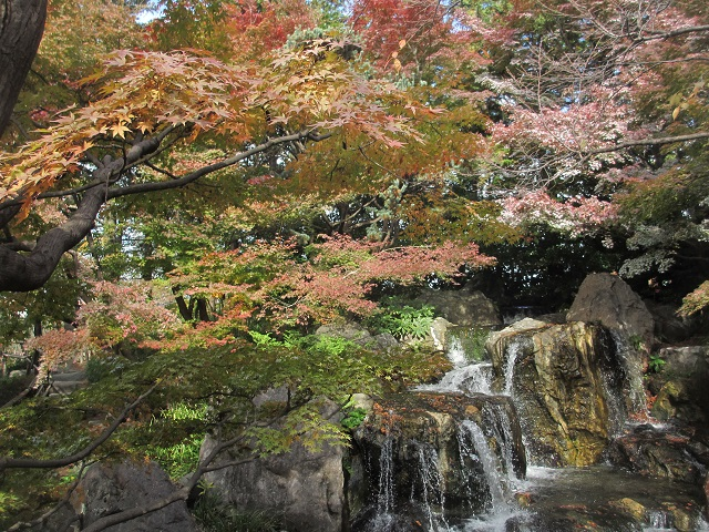 白鳥庭園の紅葉�