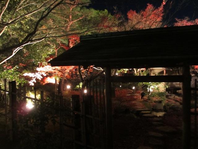 白鳥公園のライトアップ�
