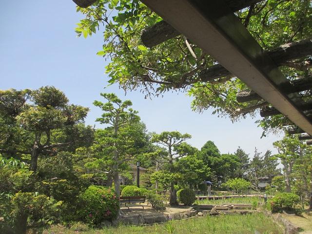 無量寿寺のカキツバタ�