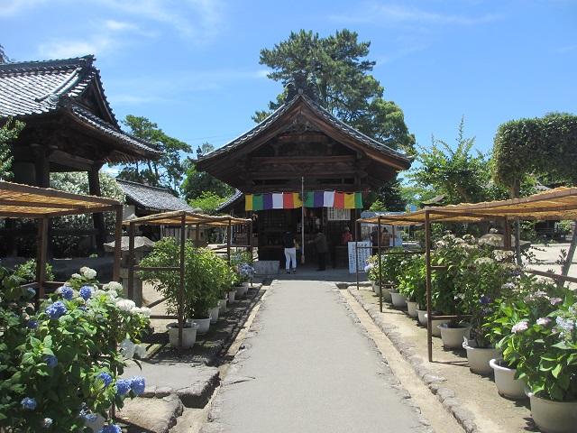 性海寺のアジサイ�