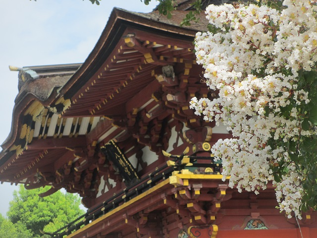 伊賀八幡宮のハス�