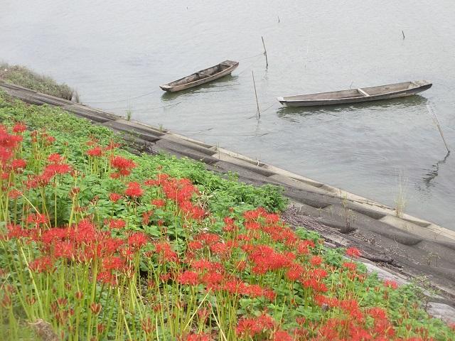 津屋川の彼岸花㉘