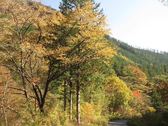 阿寺渓谷の紅葉㉙