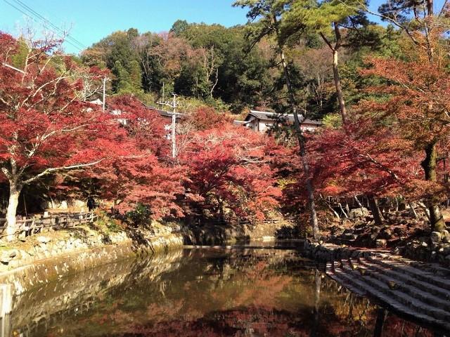 岩屋堂の紅葉�