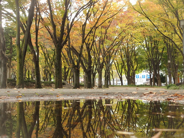 白川公園の紅葉�