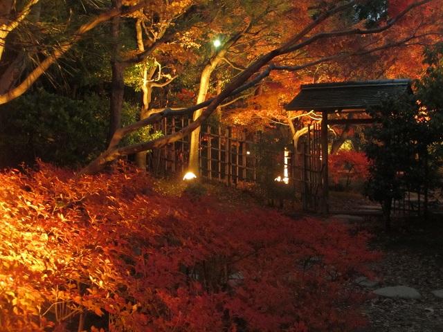 白鳥庭園の紅葉㉑