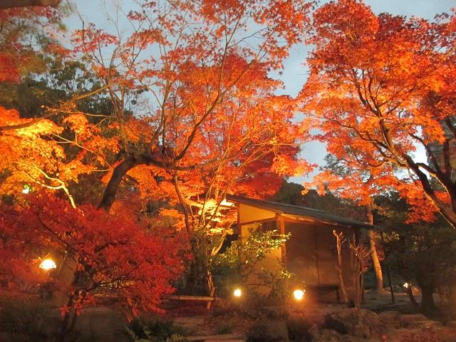 白鳥庭園の紅葉㉒