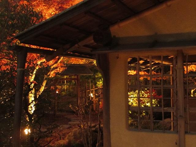 白鳥庭園の紅葉㉓
