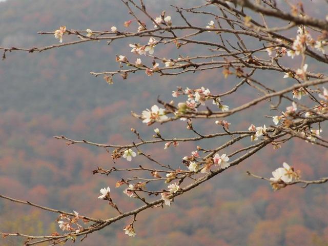 桃太郎神社の紅葉�