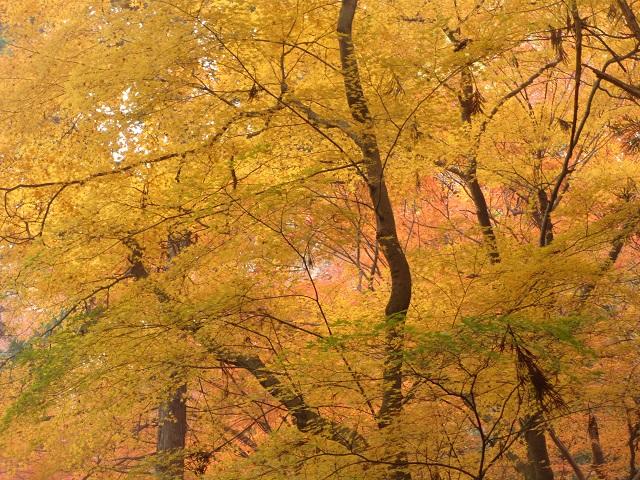 不老の滝の紅葉�