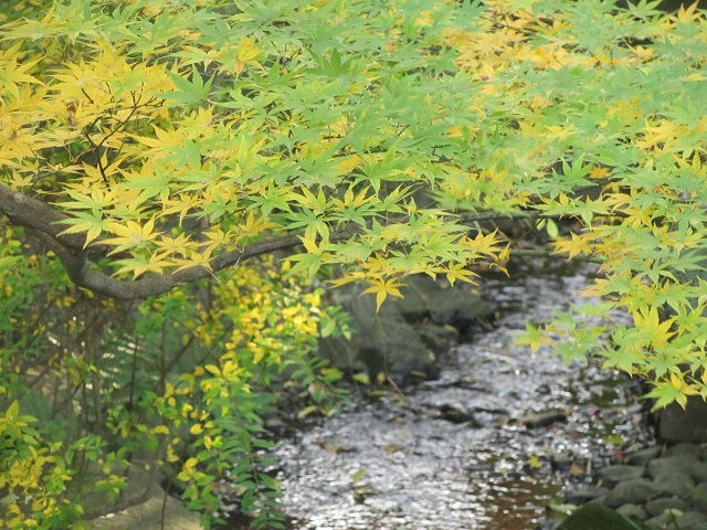 安城市丈山苑の紅葉�
