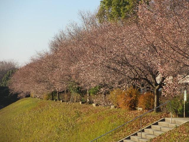 庄内緑地公園の十月�