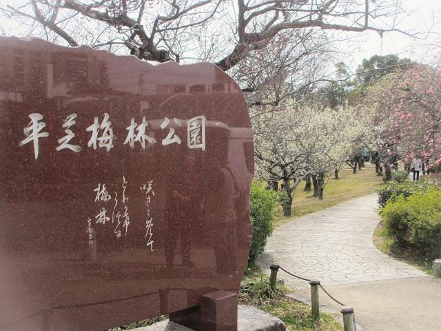 平芝公園の梅�