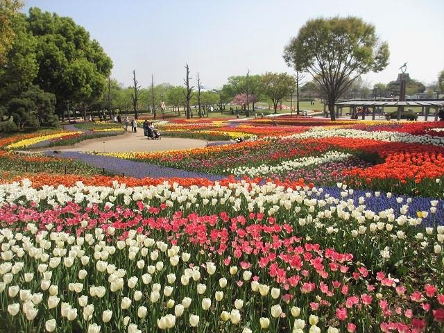 木曽三川公園のチューリップ�