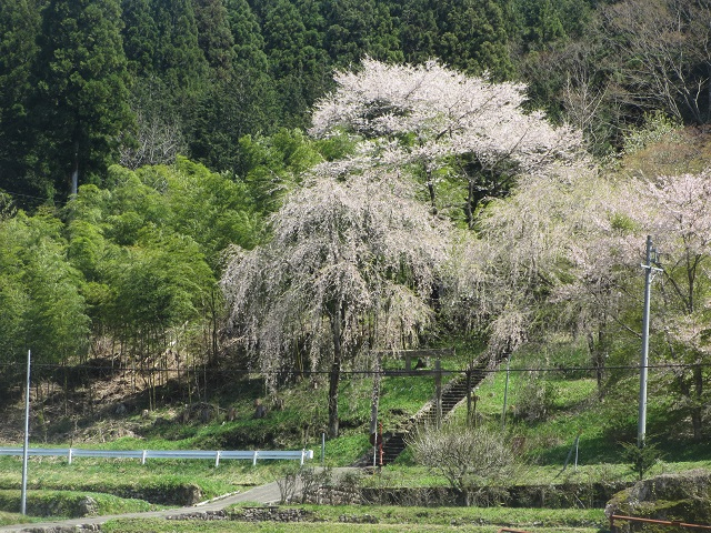郡上芝桜ツーリング�