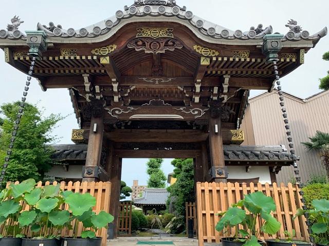 常念寺のアジサイ�