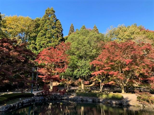 曽木公園のモミジ�