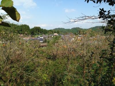 庭から和水(なごみ)町.JPG