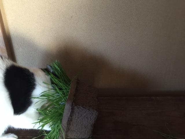 catgrass2.JPG